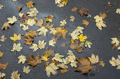 Photograph - Fall - Autumn Foliage On Wet Asphalt by Matthias Hauser