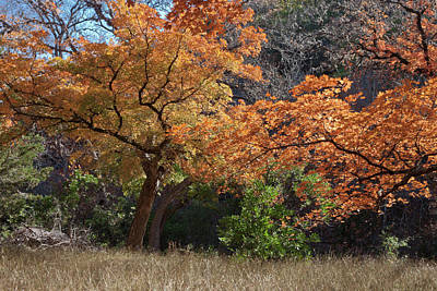 Photograph - Fall Afternoon At Lost Maples by James Woody