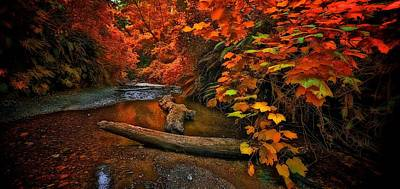 Photograph - Fall Along The Creek by Thomas Born