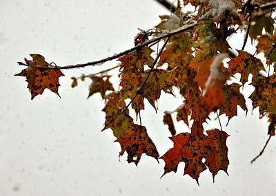 Photograph - Fall And Snow by JAMART Photography