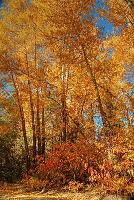 Photograph - Fall Aspen Color by Ken Smith