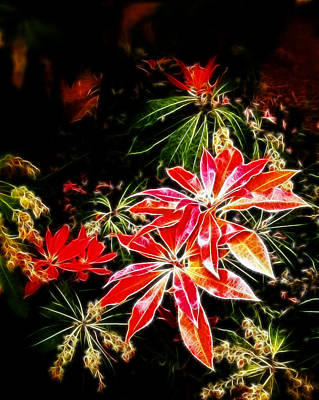 Photograph - Fall Azalea Colors by Cindy Wright