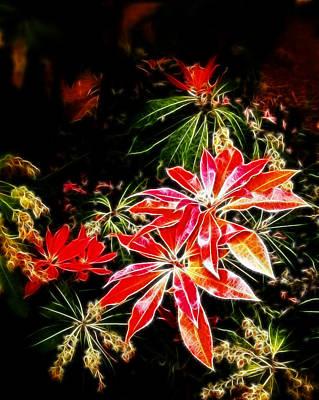Photograph - Fall Azalea Colors by Cindy Wright