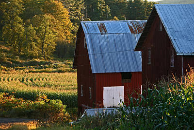 Fall Barns Art Print
