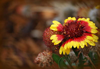 Photograph - Fall Bloom by Amee Cave