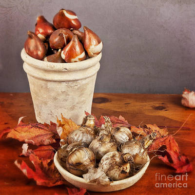 Fall Bulbs 1 Art Print by Verena Matthew