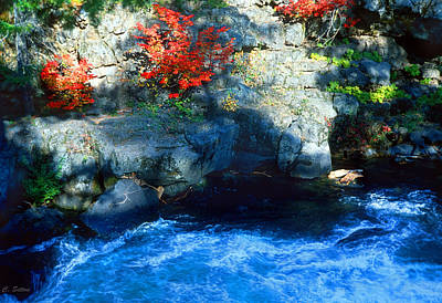 Photograph - Fall Color 2 by C Sitton