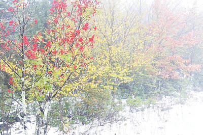 Fall Color And Snow  Art Print by Thomas R Fletcher