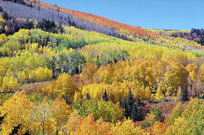 Photograph - Fall Color Aspen Near Dolores Colorado by John Brink