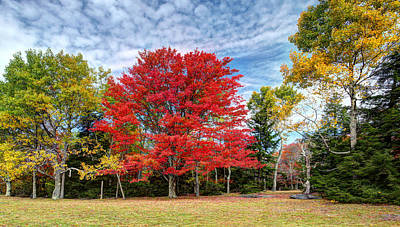 Photograph - Fall Color - Blackwater by Harold Rau