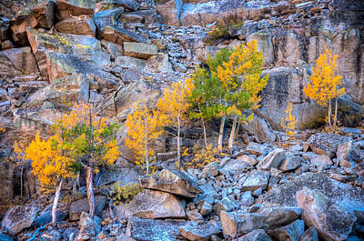 Photograph - Fall Color Growing In Granite by Connie Cooper-Edwards