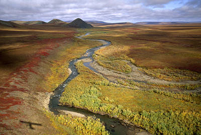 Fall Color On The Central North Slope Art Print by Joel Sartore