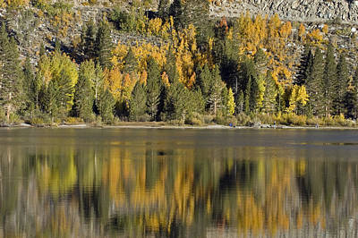 Fall Color Reflection And Tree Art Print by Rich Reid