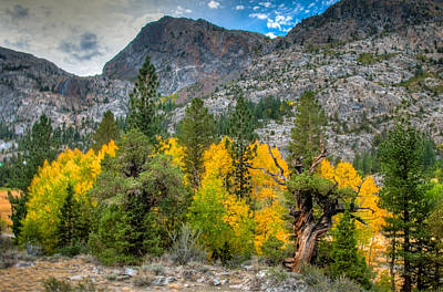 Photograph - Fall Color Trees And Mountains by Connie Cooper-Edwards