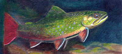 Brook Trout Drawing - Fall Colors - Brook Trout by Quinton Chapman