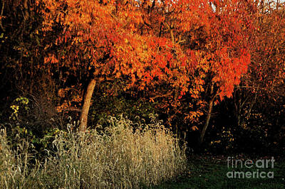 Art Print featuring the photograph Fall Colors 2 by Vilas Malankar