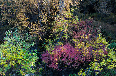 Art Print featuring the photograph Fall Colors Alaska by Gary Rose
