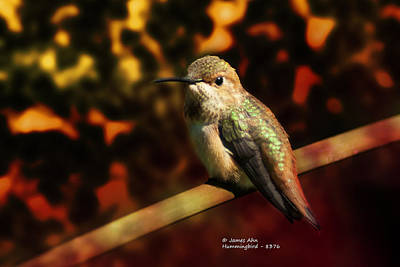 Fall Colors - Allens Hummingbird Art Print by James Ahn