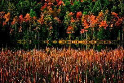 Fall Colors Art Print by Andre Faubert