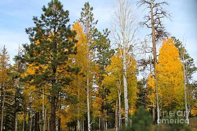 Photograph - Fall Colors Aspen by Pamela Walrath