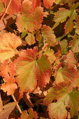 Fall Colors Art Print by Diane Bohna