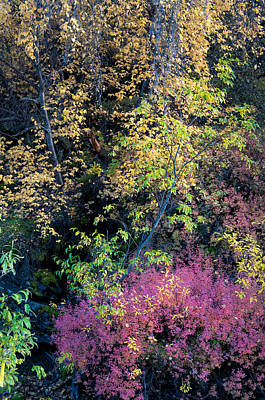 Art Print featuring the photograph Fall Colors by Gary Rose