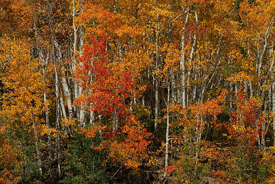 Photograph - Fall Colors Grand Mesa by Ernie Echols