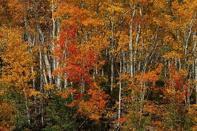 Fall Colors Grand Mesa Art Print by Ernie Echols