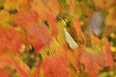 Photograph - Fall Colors by Helen Haw