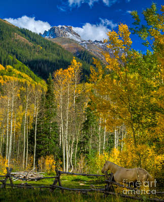 Photograph - Fall Colors In Ophir by Harry Strharsky