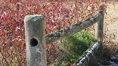 Fall Colors On The Fence Art Print