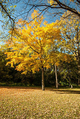 Up201209 Photograph - Fall Colors Six by Josh Whalen