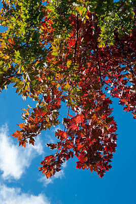 Up201209 Photograph - Fall Colors Two by Josh Whalen