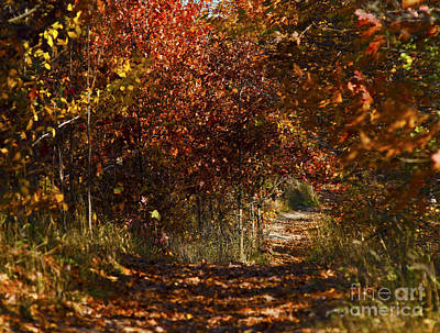 Photograph - Fall Colours by JT Lewis