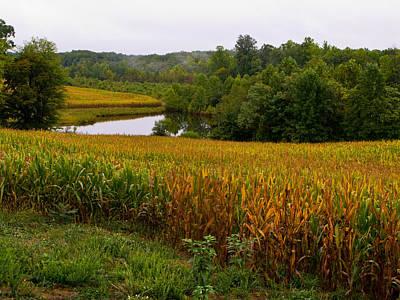 Fall Corn In Virginia Countryside Art Print by Richard Singleton