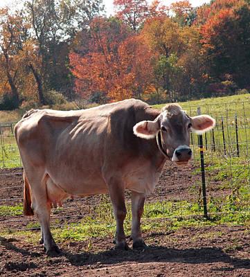 Caravaggio - Fall Cow by LeeAnn McLaneGoetz McLaneGoetzStudioLLCcom