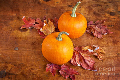 Fall Decorative Pumpkins Art Print by Verena Matthew