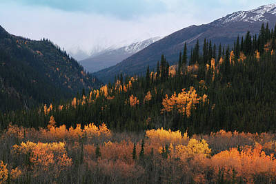 Fall Denali National Park Art Print