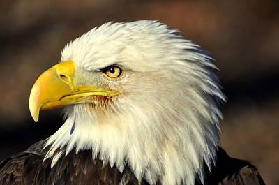Fall Eagle 6 Art Print by Marty Koch