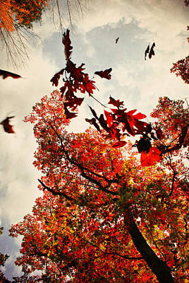 Photograph - Fall Falling by Emily Stauring