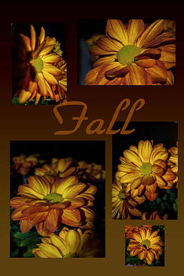 Photograph - Fall Flowers Collage by Judy Hall-Folde