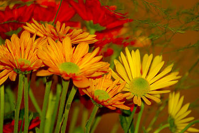 Awards Photograph - Fall Flowers by Nicholas Evans