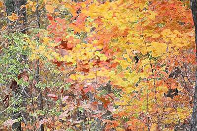 Photograph - Fall Foilage by Donna G Smith