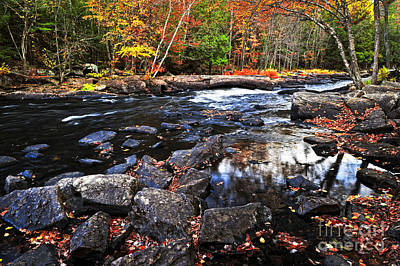 Algonquin Provincial Park Photograph - Fall Forest And River Landscape by Elena Elisseeva