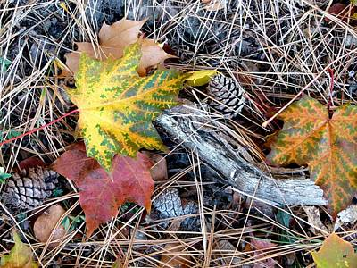 Photograph - Fall Forest Floor by Will Borden