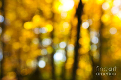 Nature Abstracts Photograph - Fall Forest In Sunshine by Elena Elisseeva