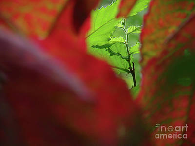 Photograph - Fall Forward by Mark Holbrook
