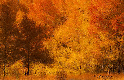Photograph - Fall Glory by Dorothy Cunningham