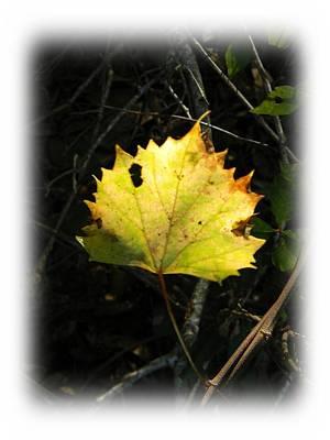Fall Grape Leaf 2 Original