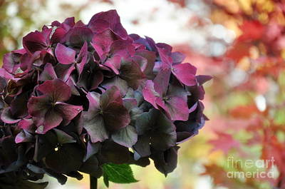 Leaves Photograph - Fall Hydrangea  2 by Tanya  Searcy